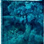 polaroid_planter_02